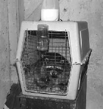 Raccoon kept illegally and in poor housing