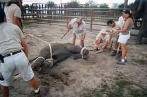 Click here to link to PETA article about elephants in circuses that contain graphic photos including above photo.