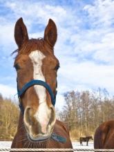 horsesStock