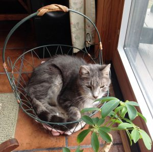 Cat curled in basket enjoying sunshine.