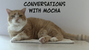Photo of Mocha, sweet orange cat