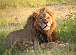 Cecil the lion was killed July 1, 2015
