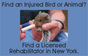 Find a Licensed Rehabilitator in New York.