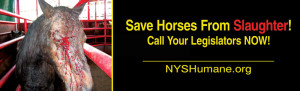 Save horses from slaughter.