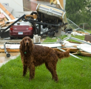 Make sure your family dogs and cats have ID, so they can be more readily reunited with you after sudden disasters, such tornadoes.