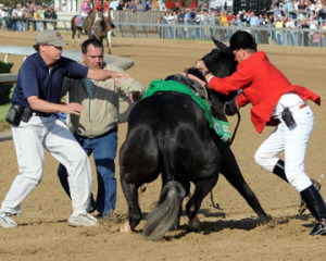 Cruelty at the race track.
