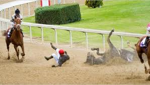 Horse suffers fall during horse race.