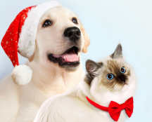 Holiday Dog and Cat