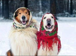 Two puppies who are ready for the winter season!