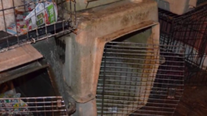 Filthy cages that held animals.