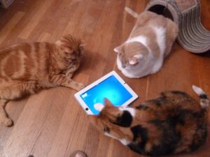 Entertaining cats with technology