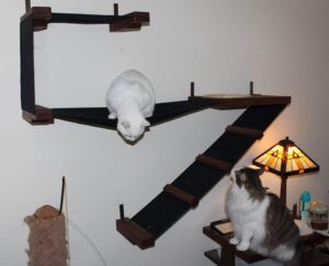 Cats playing on wall gym.